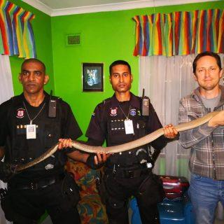 2 Meter Black Mamba Captured In Home: Parkgate – KZN A Black Mamba measuring jus… 40888481 2101134623238454 4049189115336327168 n 320x320