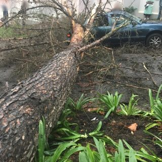 Gauteng: No injuries reported when a tree fell on a car on Cliffside Crescent, N… 45577828 2034570853230707 8506649051507195904 o 320x320