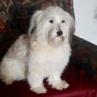 Lost Poodle:  Redcliffe – KwaZulu-Natal   Pictured is Faith, a six (6) year old … 45612424 2191330597552189 5033688579851681792 n 320x320