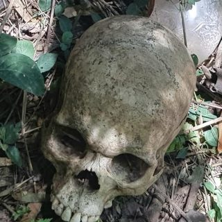Human Skull Discovered: Verulam – KZN  A human skull was discovered in a dense b… 45731033 2194889240529658 5527371821868908544 n 320x320
