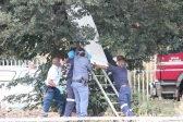 Vanderbijlpark residents discover man's body hanging from tree Vanderbijlpark residents discover man   s body hanging from tree