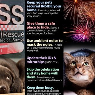 31 December 2018   *Fireworks*   Don't forget about your fur babies while you're… 49342226 2499234230151862 6106602871027924992 o 320x320
