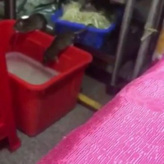 A video compilation sent in by a follower of some unusual footage at McDonalds r… 51840422 252023292383988 4270311228783460352 n 320x320