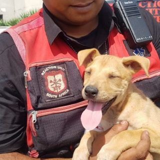 Dog Found: Everest Heights – KwaZulu Natal  The public is requested to assist in… 54220534 2388080357877211 374223627236671488 o 320x320
