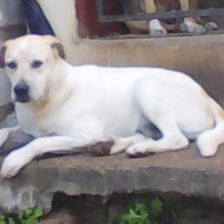 Lost Dog: Chatsworth – KZN  The public is requested to be on the lookout for Pri… 64212211 2537258689626043 7868620320972734464 o 320x320
