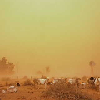 If you are within the areas that are currently experiencing dust, please be safe… 67413962 10214956753333910 3929872870859079680 o 320x320