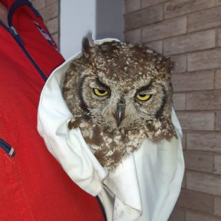 ER24 Vaal crews rescued an owl early on Sunday morning after it flew into a vehi… 70752307 2535513973176618 311320485407227904 o 320x320