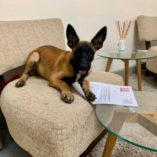 06 January 2020  New employee – K9 Odi   IPSS Medical Rescue welcomes Odi to the… 81340442 3479910782084197 3348796025144868864 o 320x320
