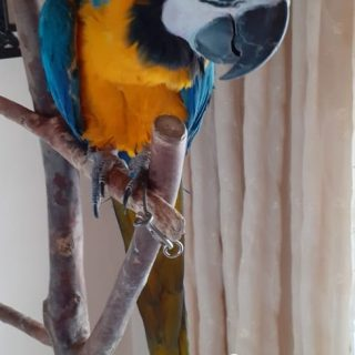 Search For Lost Macaw: Trenance Park – Verulam  A resident of Madrona Drive in T… 89863093 3137971712888068 6164468419946086400 o 320x320