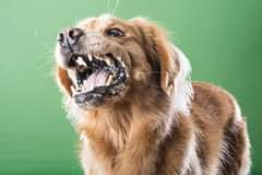 What do you know about rabies? Read this FAQ and spread the word among your   fa… 120163632 795113384635798 1114766987497742251 o
