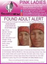 #MissingMinorsPinkLadies    FOUND: Elsies River WC Anina Brown 53 yr 24 Oct 2020… 123053018 4472340036171755 6168852062814102929 o