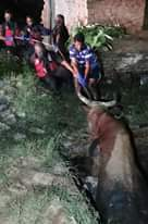 Bull Rescued From Sewer Pit: Oakford – KZN  A bull that was trapped in an open s… 123906910 3788253721193194 1947064272469811188 o